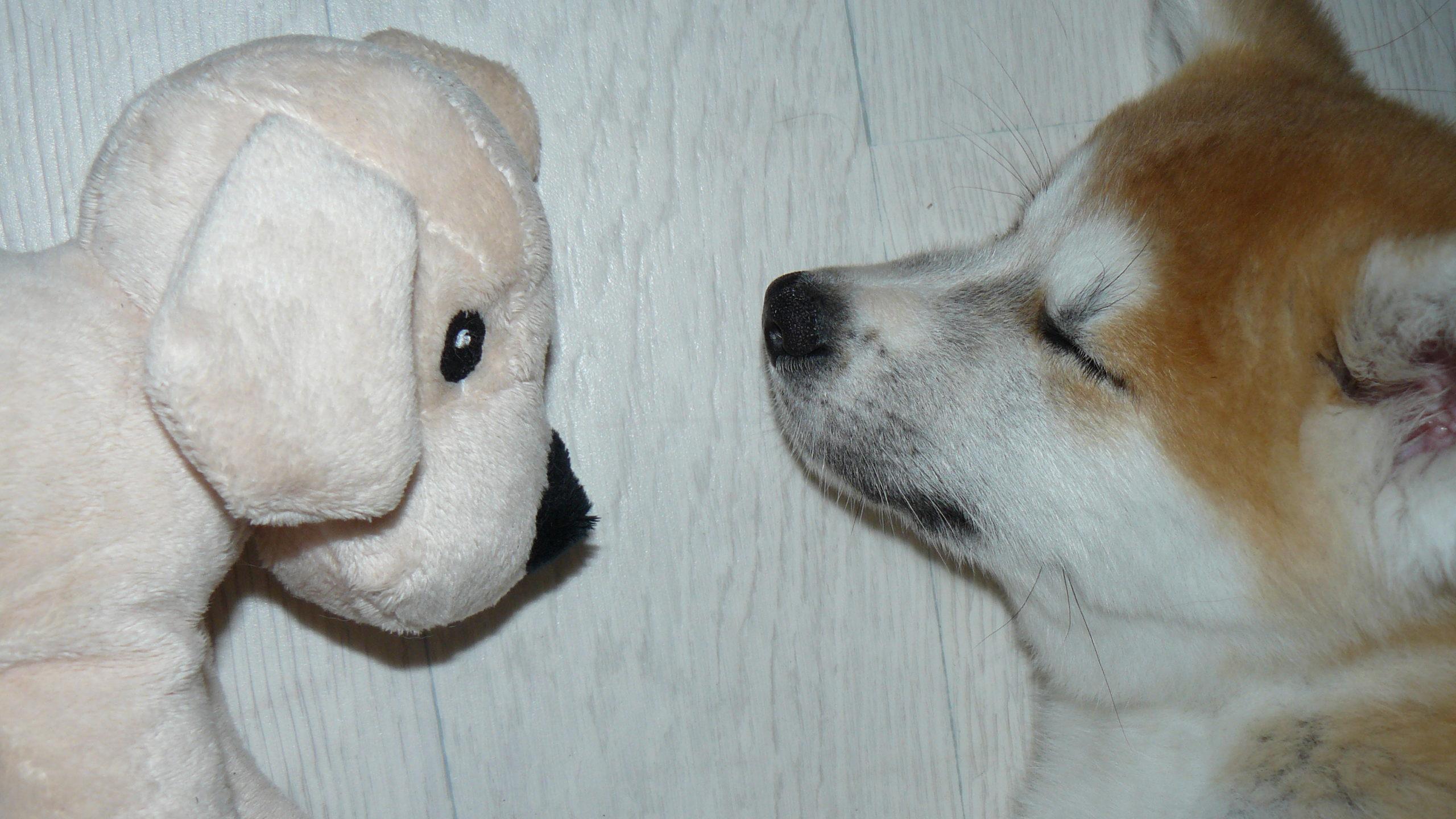 Pourquoi faire appel à un éducateur canin ?
