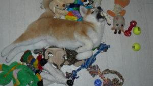 choisir les bons jouets pour chien évite les mauvais apprentissages
