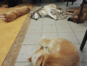 Les rencontres avec d'autres chiens font partis des besoins à combler