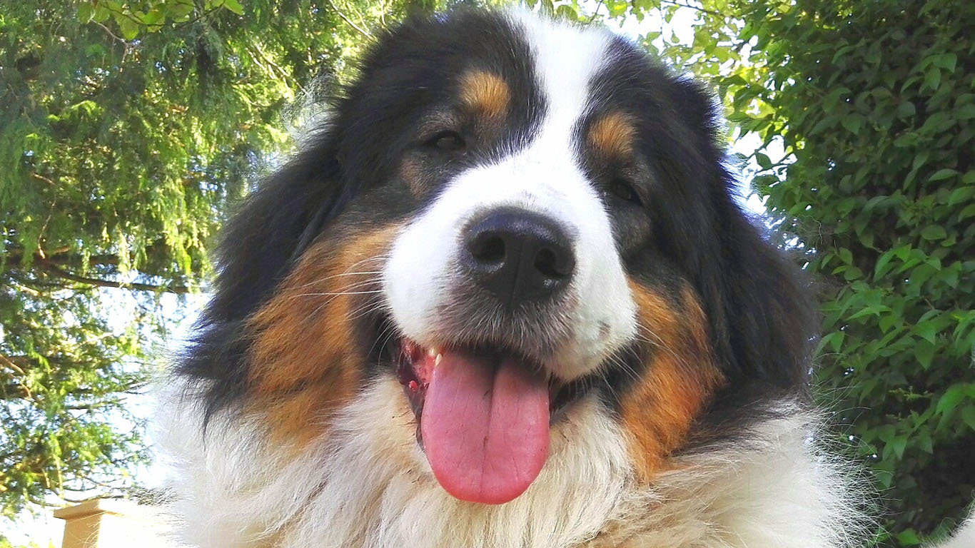 Bye bye coercitif, bonjour chien heureux