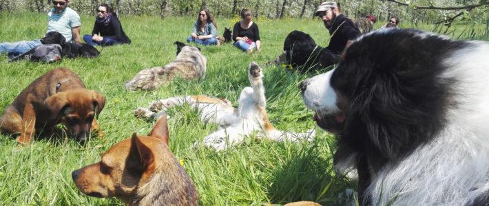 école des chiens