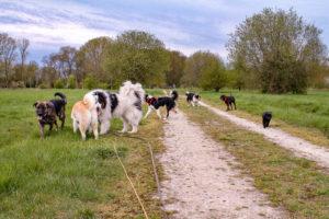 Etre promeneur de chiens