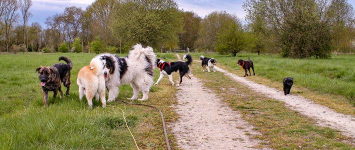 Professionnels du monde canin : Comment les choisir ? Comment le devenir ?