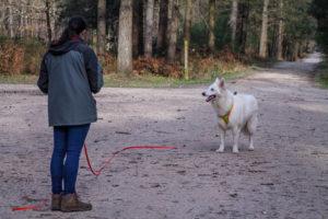 comment faire pour devenir éducateur canin ?
