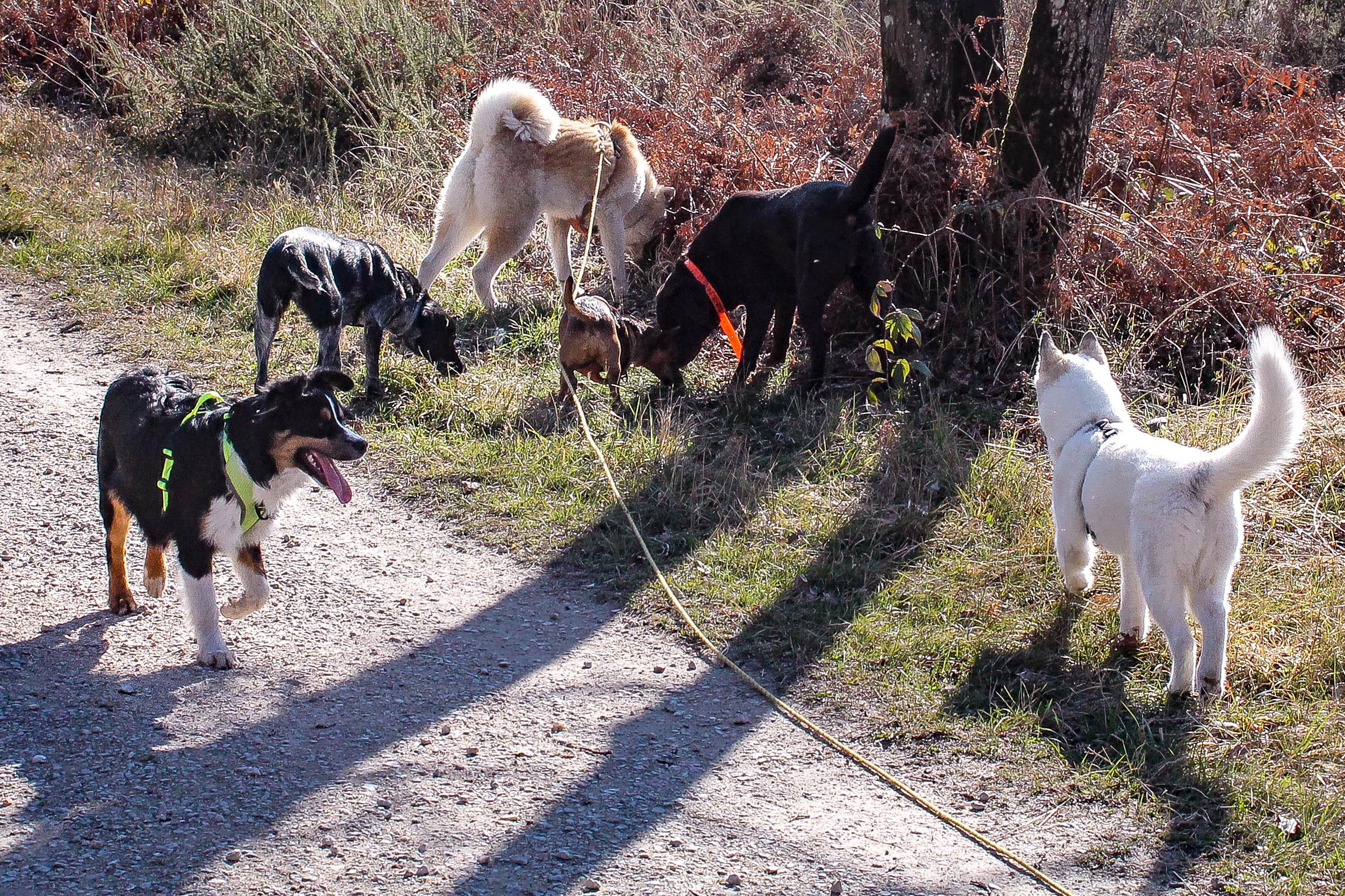Nos chiens en images