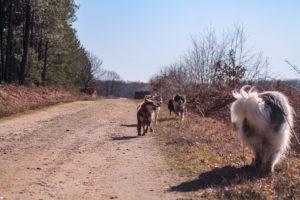 photo chiens libres