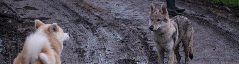 EDUCATEUR CANIN COMPORTEMENTALISTE A TOURS 37 – Un Chien dans ma Vie