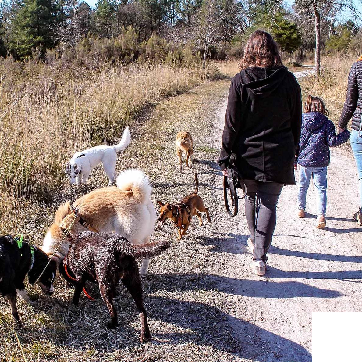 programme d'éducation à la connaissance du chien et au risque d'accident par morsure