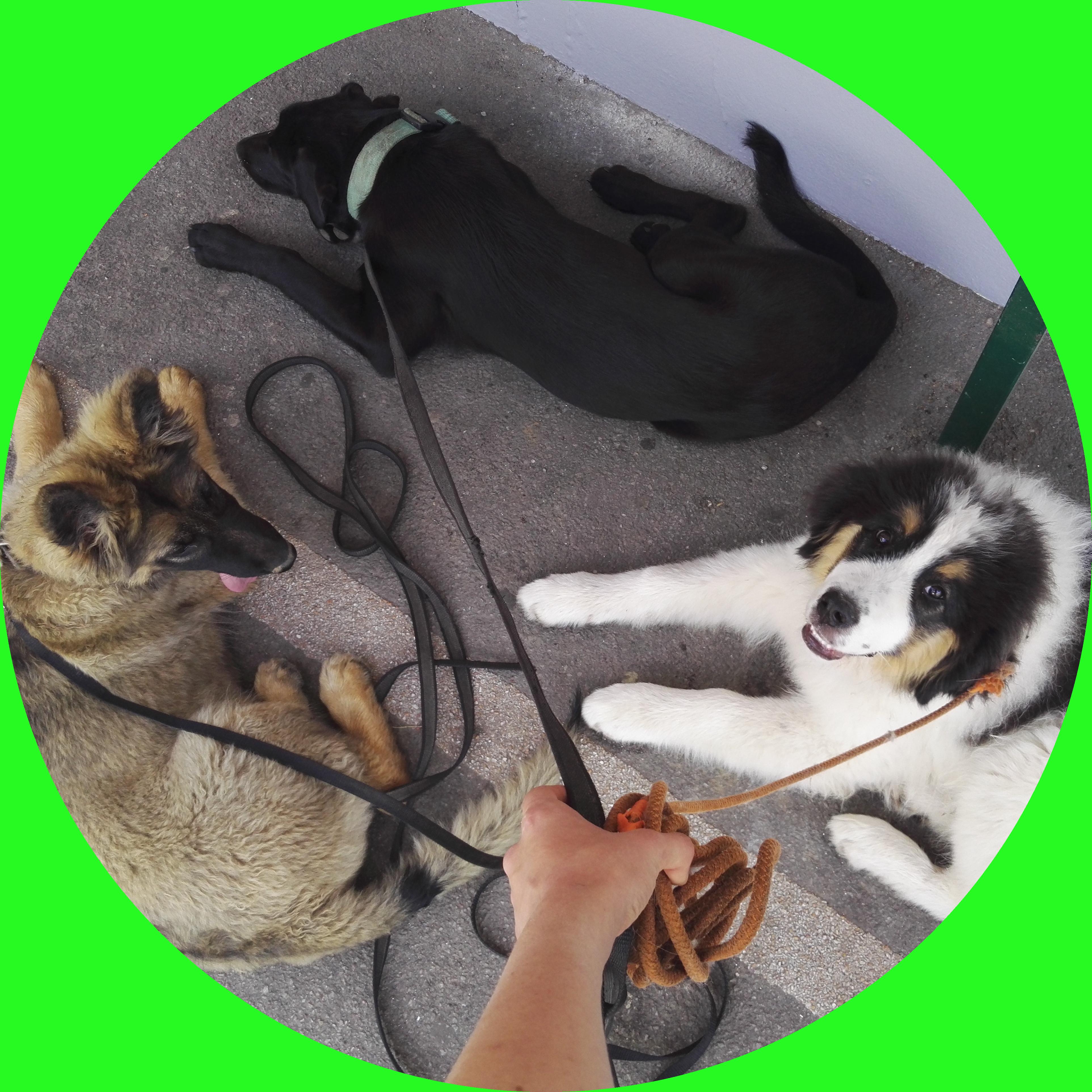 rééducation des chiens à partir de 6 mois