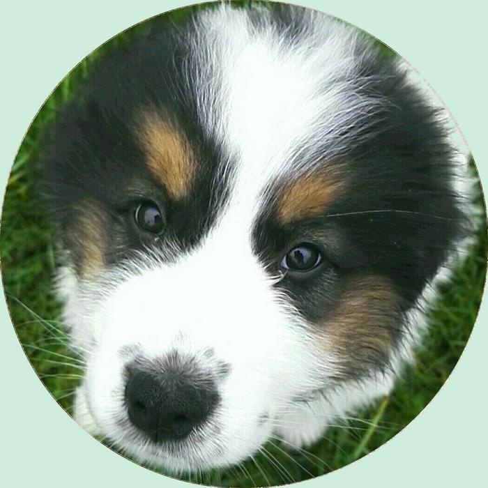 Conseil à l'adoption avant l'acquisition d'un chiot dans un élevage ou d'un chien dans un refuge