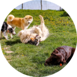 Cours collectifs canins
