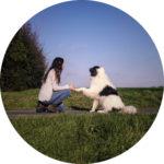 amélie clert propose une éducation canine bienveillante