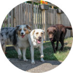 Test de socialisation pour intégrer la pension canine libre de Maxime le Noë