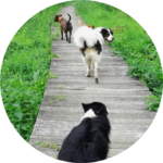 promenades entre chiens en votre absence