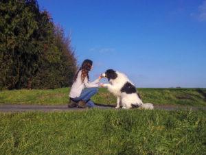 dresser son chien à donner la patte