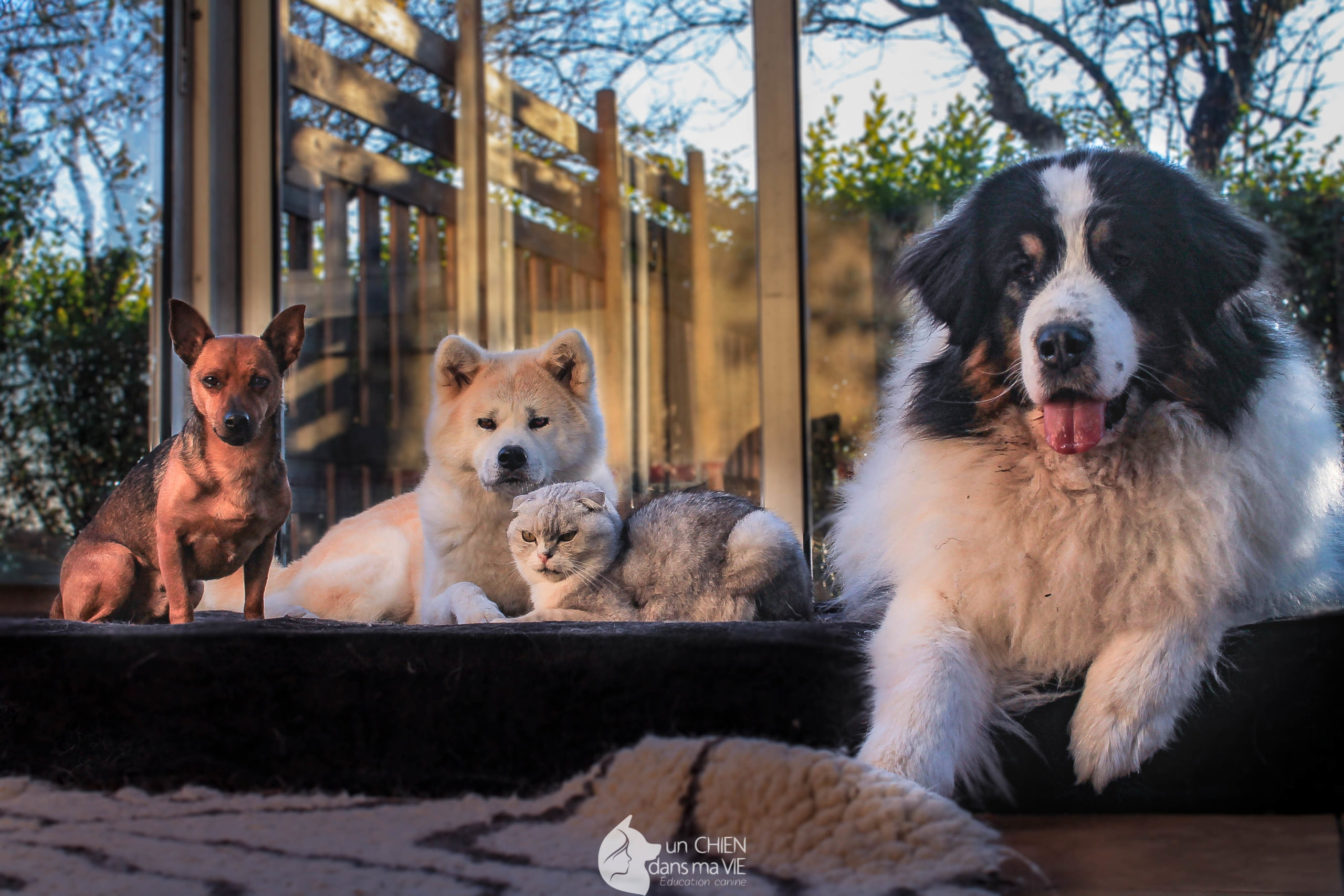 Protégé: Bien débuter avec son chiot ou son chien