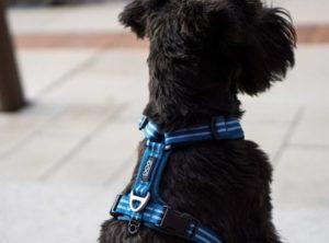 harnais-dog-copenhagen-comfort-walk-air-bleu