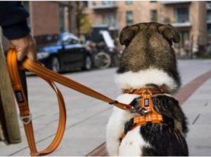 harnais-dog-copenhagen-comfort-walk-air-orange